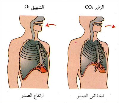 فوائد الهواء