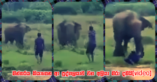 Wild elephant kills person who went forward ... reciting 'manthra'! (video)