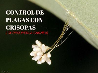 Control Natural en su lucha contra determinadas plagas de fitófagos
