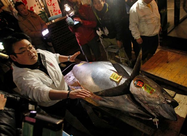 what is the most expensive tuna
