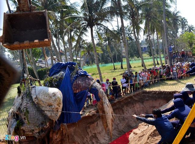 'Bảo tàng' xương cá voi ở Lý Sơn - Hình 3