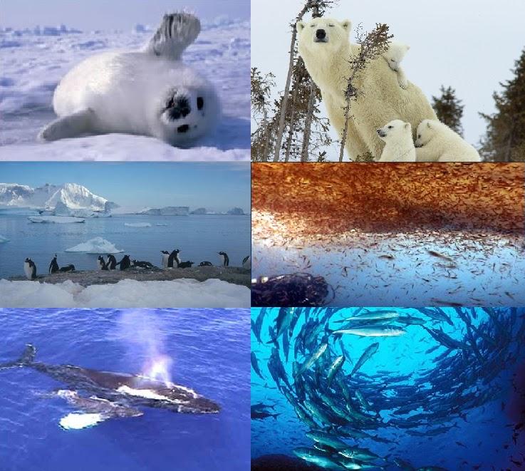 Resultado de imagen para ecosistema polar