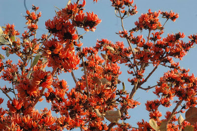 Holi Celebrations 2013 | Special Holi Events in Bangalore ... Palash Flower Wallpaper