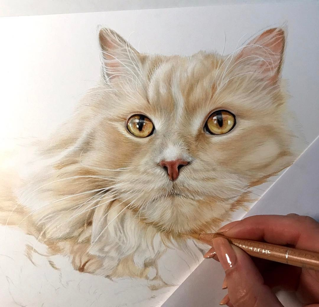 13-Ziggys-Kelly-Lahar-Realism-with-Animal-Portrait-Drawings-www-designstack-co