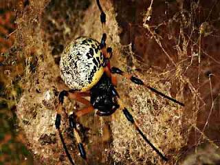 к чему снится паук, сонник паук