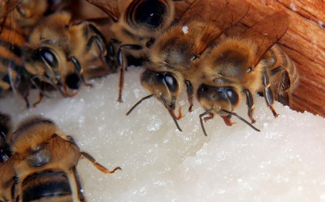 Μελισσοτροφή τύπου πάστας (Fonta) Συνταγή