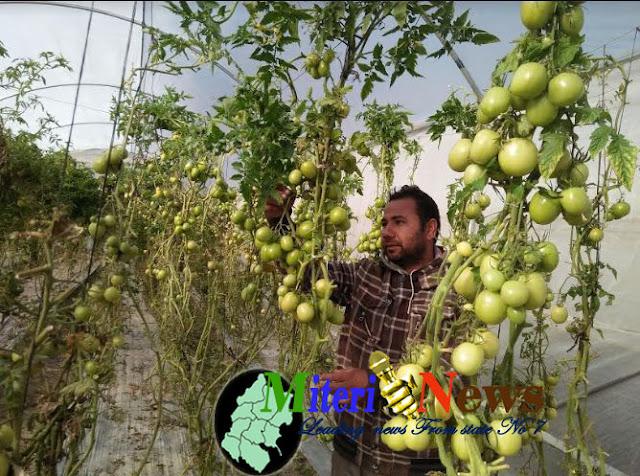 बैदेशिक रोजगारबाट फर्केर तरकारी खेतीमा जम्दै युवा