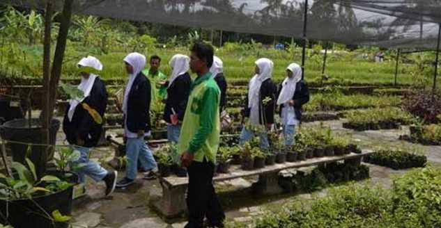 Wisata Tanaman Obat Herbal di Agro Merapi