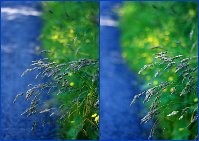 grass, green, road, blue, collage,  Summer light © Annie Japaud Photography 2013