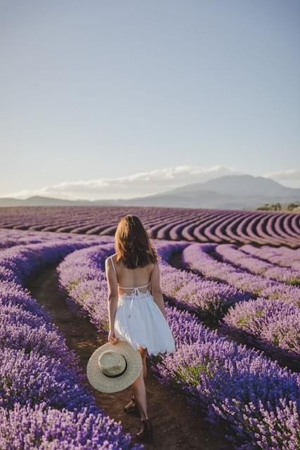 Ý Nghĩa Của Hoa Oải Hương (Lavender) Là Gì? - Ảnh 3