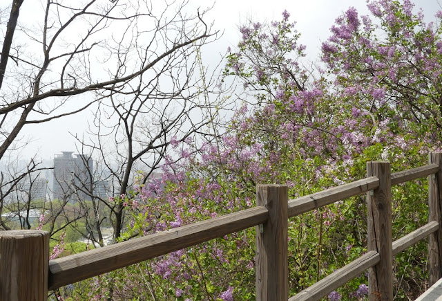 Seoul - Namsan-Park