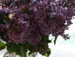 My birthday and one of my favorite flowers, beautiful lilacs, image by LeAnn as seen on linen & lavender