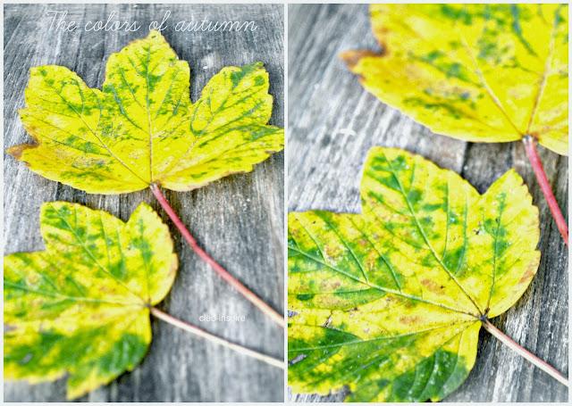 liście jesień