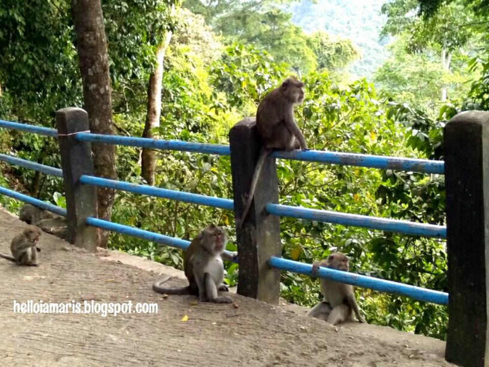 Apa Sih Sebenarnya Yang Jadi Daya Tarik Monyet