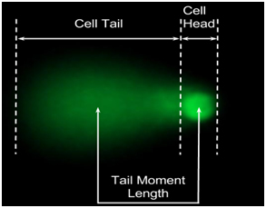 Comet areas included in comet tail moment calculation