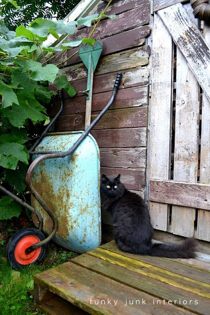 Rustic garden shed 4 - the reveal! / vintage aqua wheelbarrow with black cat