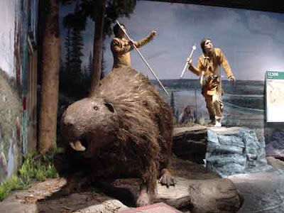 Giant Beaver - Castoroides - Giants of the Americas