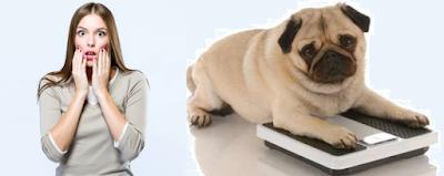 kilolu köpek