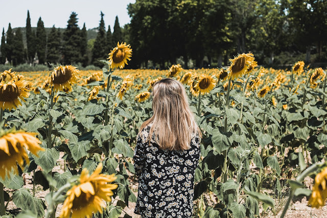 Voir les tournesols à Lourmarin | Moments of life #13