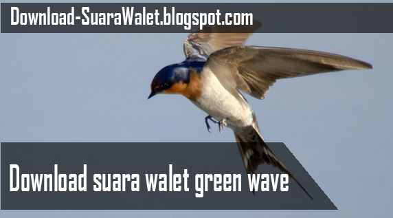 Download Suara Walet Green Wave
