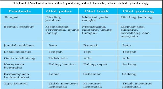 tabel perbedaan otot polos,otot lurik dan otot jantung
