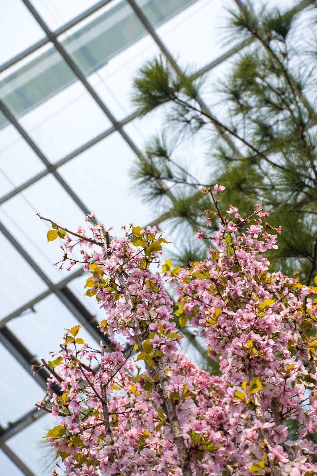 flower dome singapore sakura exhibition