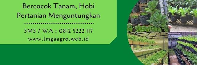 bercocok tanam,hobi,budidaya tanaman,benih buah,benih sayur,pertanian,berkebun,kebun,usaha pertanian,lmga agro