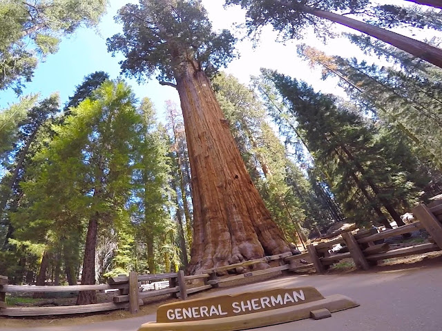 Sequoia Gigante - General Sherman