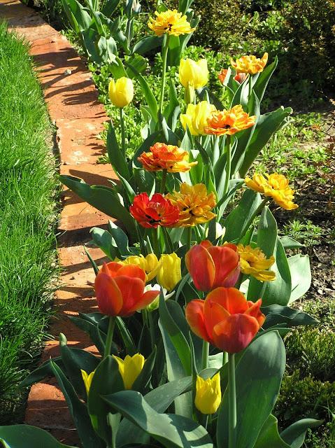 kompozycja z tulipanów