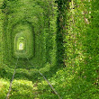 The Tunnel Of Love:The magical looking place