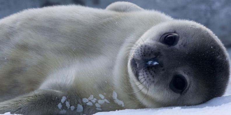grito som mp3 foca skype
