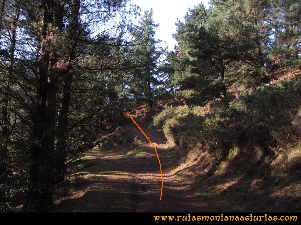 Pico Mua PR AS 46 Atravesando un pinar