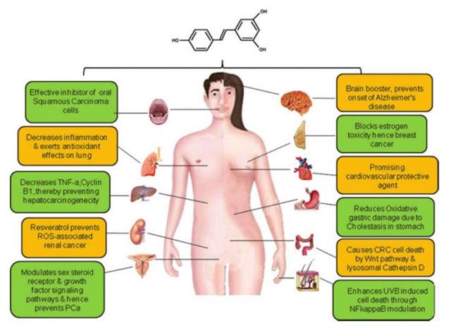 Kelebihan resveratrol untuk kesihatan