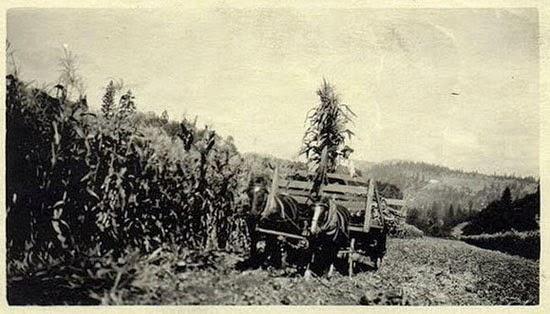 OVNI em fazenda Estados Unidos