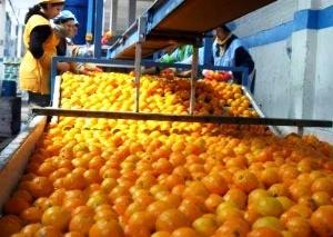 En el primer semestre, la importación de naranjas provenientes de España y México llegó a las 3542 toneladas, cuando en el mismo período del año pasado no se registraban compras al exterior.