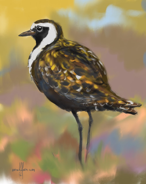 Golden plover bird painting by Artmagenta