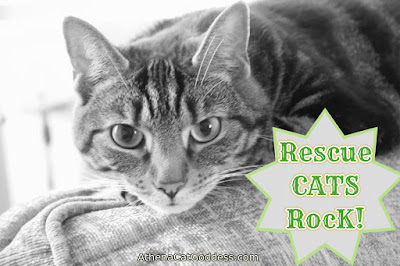 Rescue Cats Rock black and white photo of cat poster