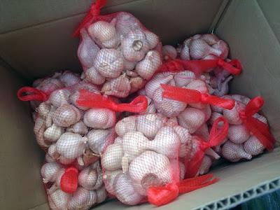 無農薬・無化学肥料で栽培された種ニンニク6kg