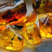 Китайские ученые обнаружили в янтаре древнего жука-хищника
