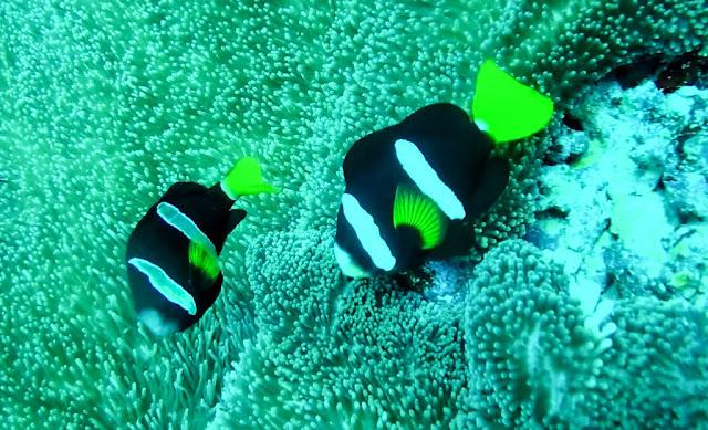 Submarinismo en Thulusdhoo