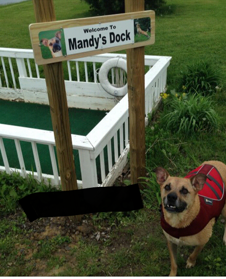 Bark Out Loud: Dock Diving Diva, Mandy and Sherry