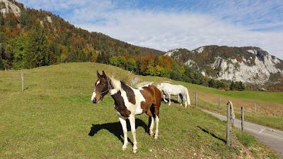 pferde-malsen