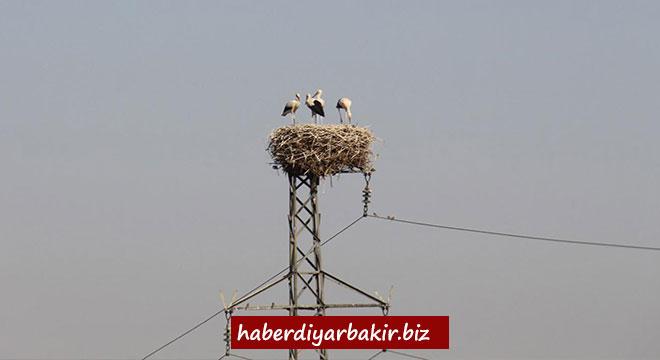 Dünyadaki en önemli leylek kolonilerinden biri Diyarbakır Bismil'de bulunuyor