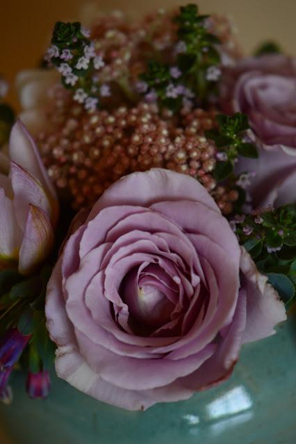 rose, sterling silver, ozothamnus, monday vase meme, small sunny garden, desert garden, amy myers