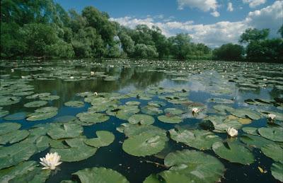 Ekosistem Bioma Air Tawar di Bumi
