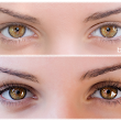 Brow and Lash Tinting Facts