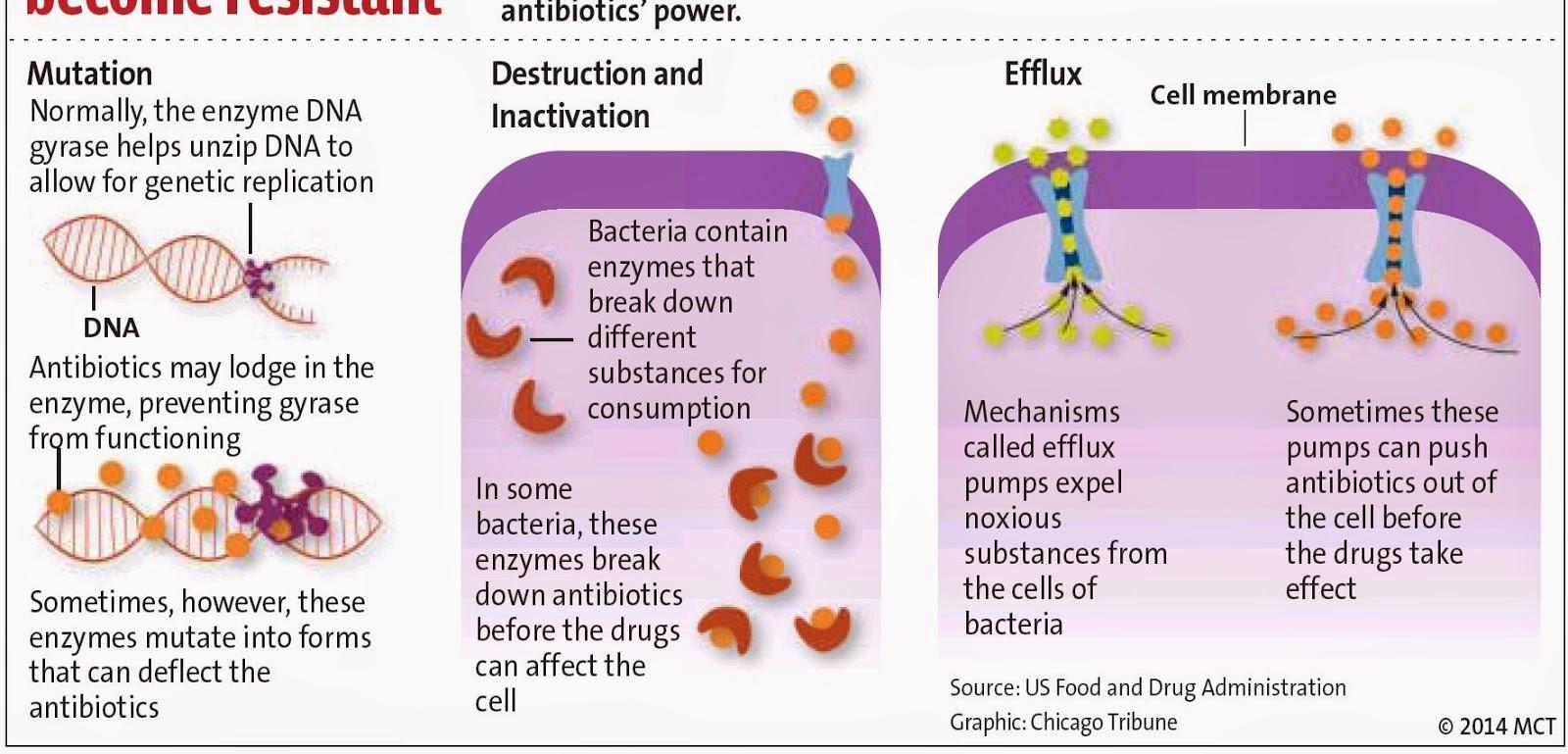 Natural Selection Antibiotic Resistant Bacteria