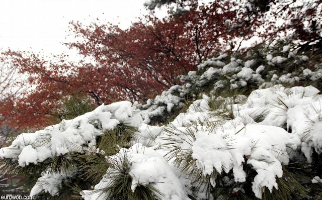 Pino nevado en Seúl