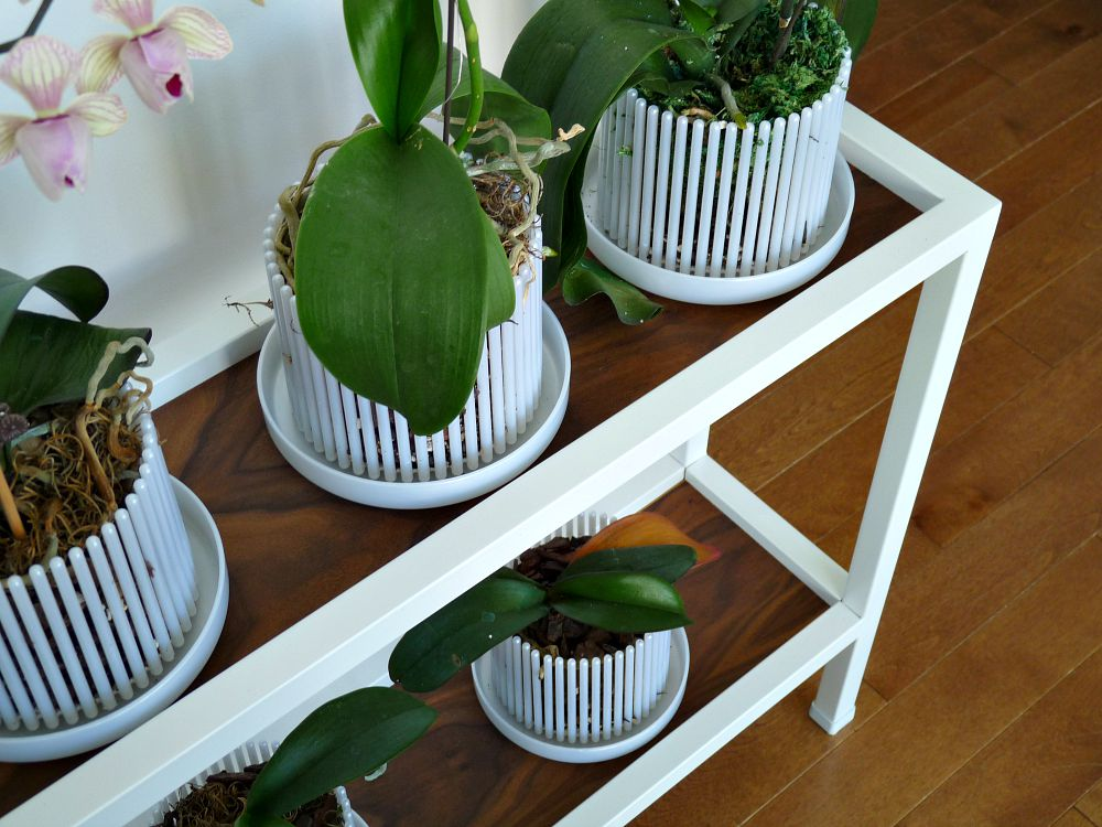 Orchitop Carousel Planter from Repotme.com