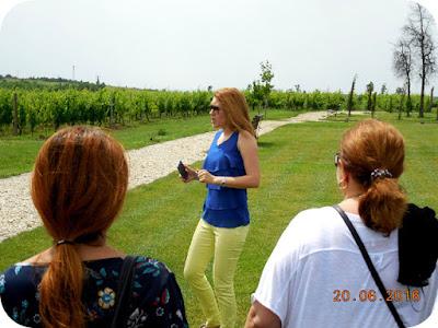 vizita pe domeniul viticol Dobrusa